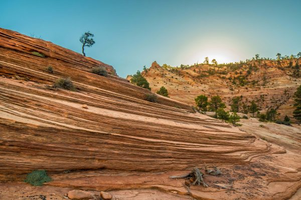Lone Tree at Zion