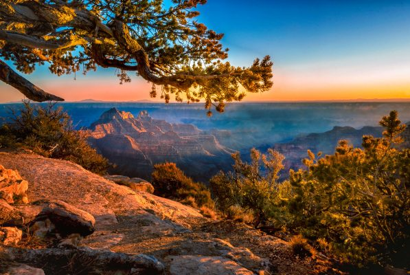 Tree over the Grand Canyon