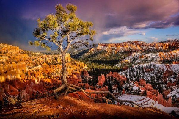 Tree on the Precipice