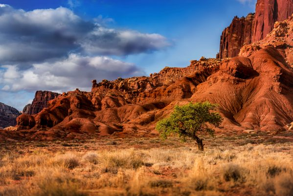 Capitol Reef Landscape Photography