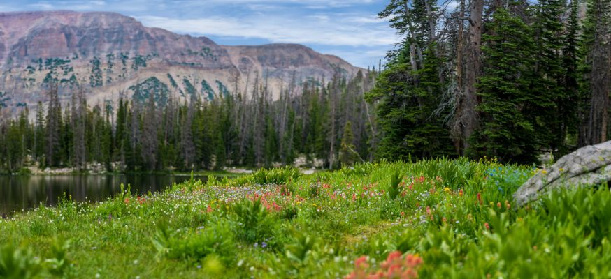 Uinta Mountain Spring Flowers